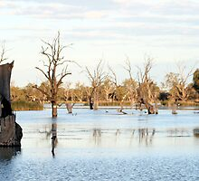 """Ghost of river's Past"" Barmera South Australia by Robyn Jolly"