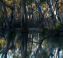 """Still Water Reflecting"" Barmera South Australia by Robyn Jolly"