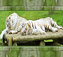 whitetigers by cynthiab