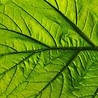 Green Glowing Leaf by Walt Conklin