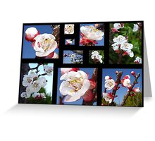 Apricot Blossom Collage Greeting Card