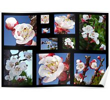 Apricot Blossom Collage Poster
