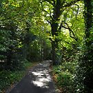 Autumn Woodland Pathway. by Finbarr Reilly