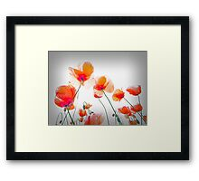 Parasol Poppies Framed Print