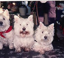 The Three Westie lads by MarianBendeth