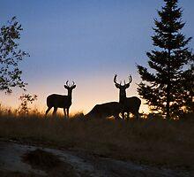 """""""  Whitetail Bucks at Dusk  """" by fortner"""