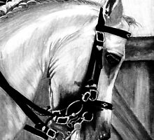 Lusitano Dressage Horse Portrait by Oldetimemercan