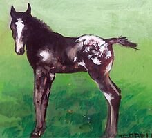 Appaloosa Foal Portrait by Oldetimemercan
