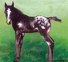 Appaloosa Foal Portrait by Oldetimemercan