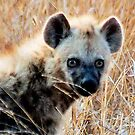 THE BABY  HAYENA AND 'EYE CONTACT'  by Magaret Meintjes