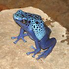 Blue frog by Vanessa k