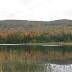 Foliage Reflection by LeeHicksPhotos