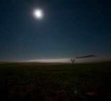 The Solidarity of the Tree in the Fogbank by Moonlight by Tony Lin