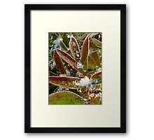 Peonies in a Freeze Framed Print