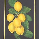 Lemons 1 of 2 &quot;Lemon Mandarine Suite&quot; by JANET SUMMERS