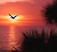 Pelican Sunset by NatureGreeting Cards ©ccwri