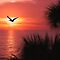 Pelican Sunset by NatureGreeting Cards ccwri