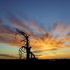 Sunset,Sunrise by bushdrover