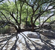 The Sprawling Mesquite by ChuckCheatham