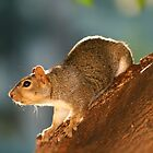 Squirrelin' Around by Micci Shannon