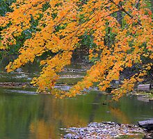 Reflections In The Stream by kkphoto1