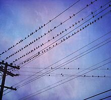 Birds on Wires 2 by Tama Blough
