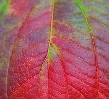 Leaf colours by relayer51