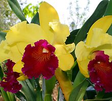 BLC - Alma Kee 'Tipmalee'  by Forto