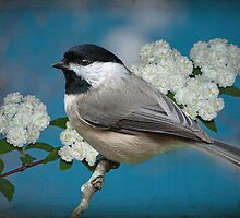 Chickadee and Bridal Wreathe by Bonnie T.  Barry