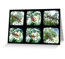 Happy Bugs Polyptych - TTV Greeting Card