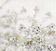 White Delight by garts