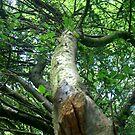 A Tree! by Sammyss3