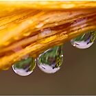 Three Drops by Chet  King