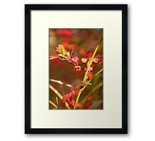 Berries of the Spindle tree Framed Print