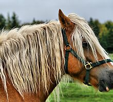 Clementsport Horse by HighHeadArtwork