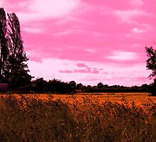 Pink Skies over Barley by charlylou