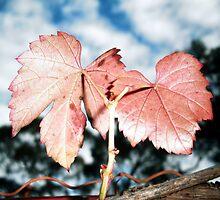 Red Wine by Deb  Savage
