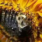 Pollenator by Jeff Ashworth & Pat DeLeenheer