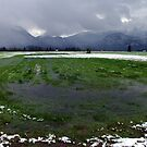 Green Grass in October - Wetlands by Daidalos