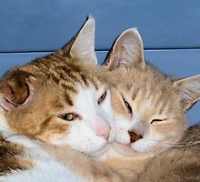 brotherly love by Anita Konopka