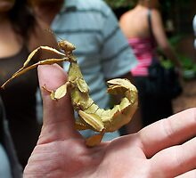 Walking Leaves - Giant Prickly Stick Insect by RatManDude