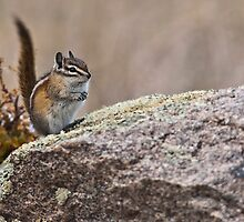 Acting Squirrelly by Jay Ryser