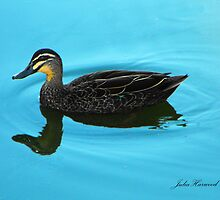 Duck Reflected by Julia Harwood