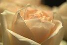 Softness by Kim McClain Gregal