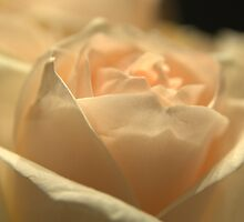 Softness by Kim McClain Gregal