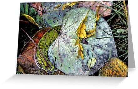Nature's Paint Box by Nadya Johnson
