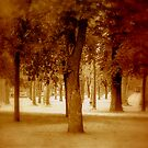 Trees in Sepia by rosedew