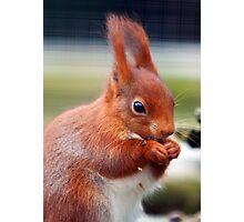 Squirrel Nutkins Photographic Print