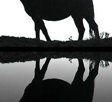 Scab Land Reflection by Adair  Davidson
