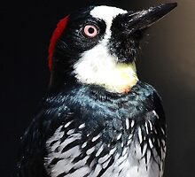 Profile of an Acorn Woodpecker by Wing Tong